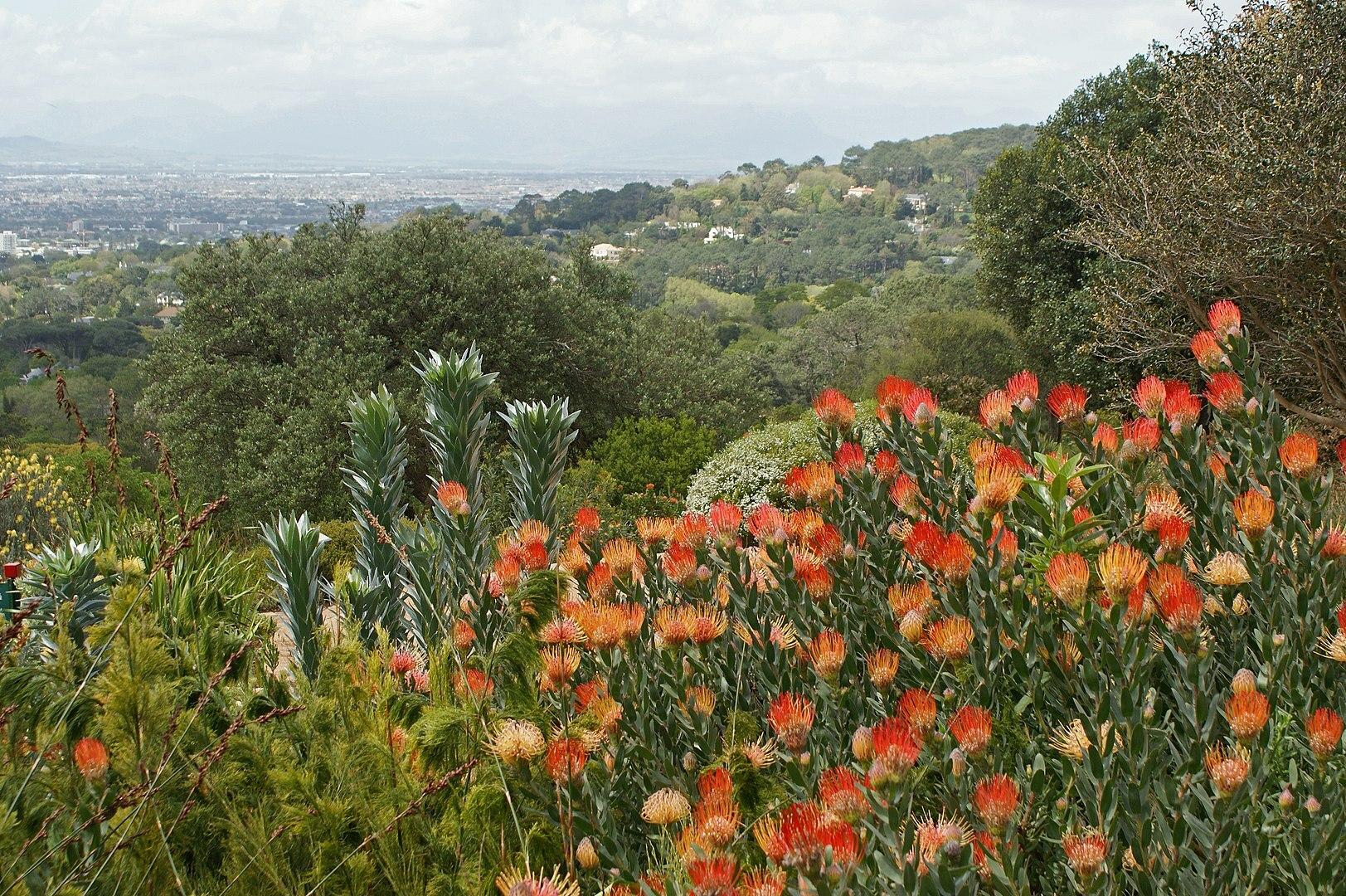 Floraregio van de Kaap