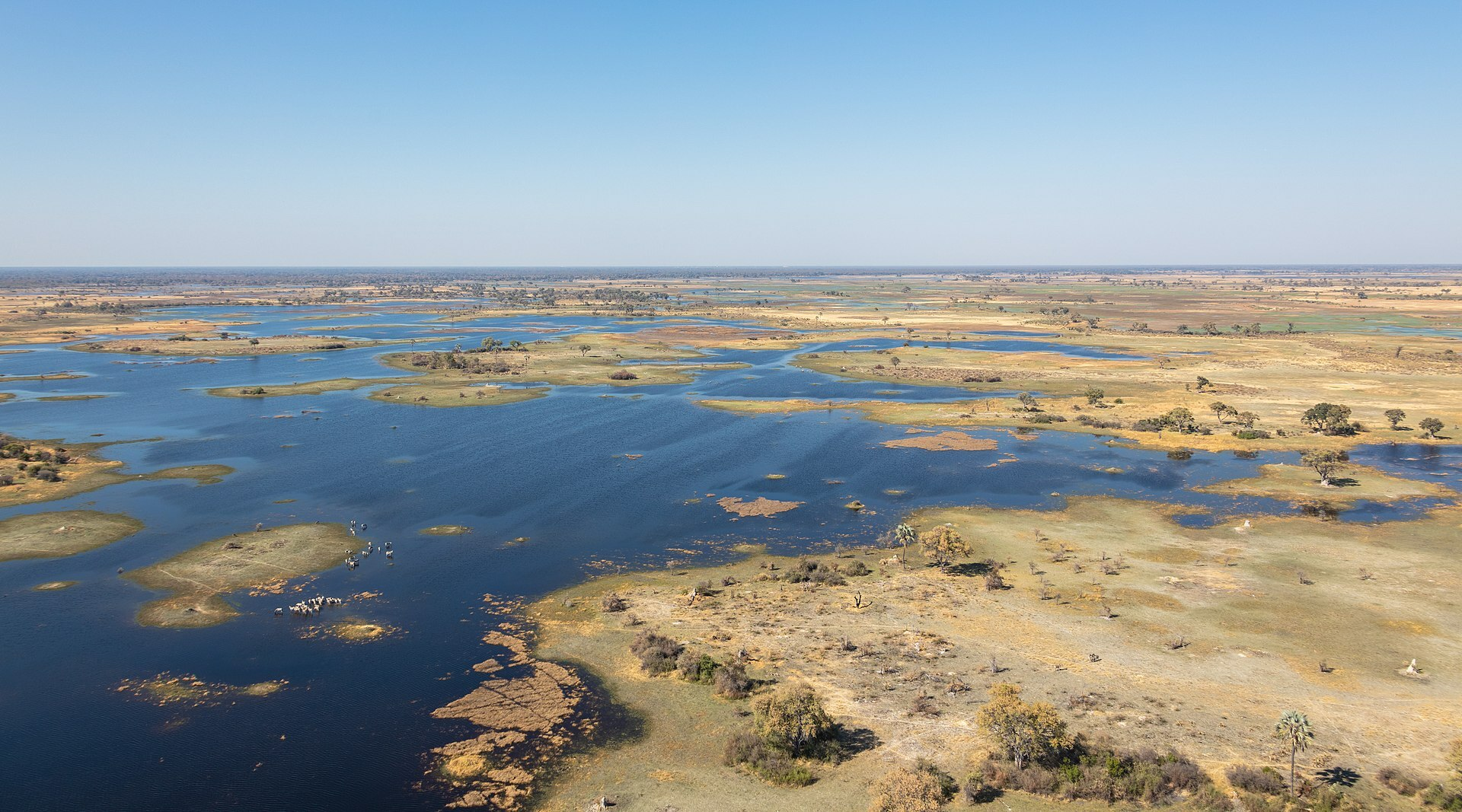 Typical region in the Okavango Delta